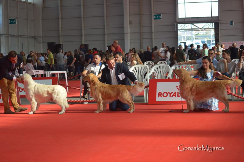 Club Retrievers España